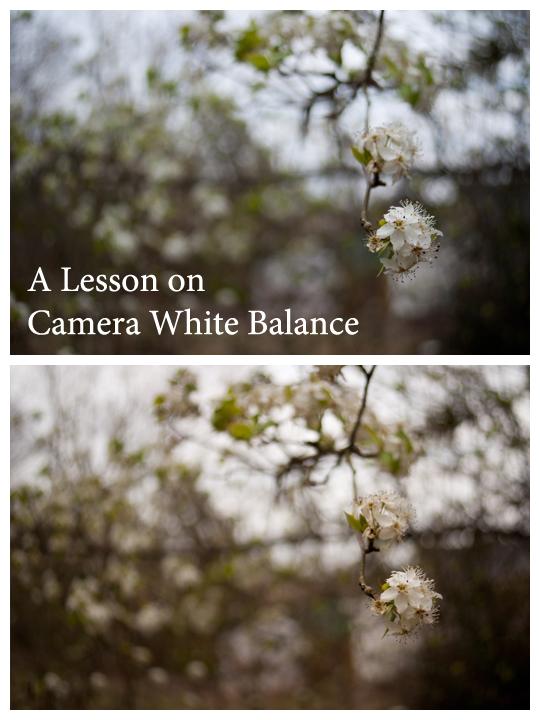 Camera White Balance