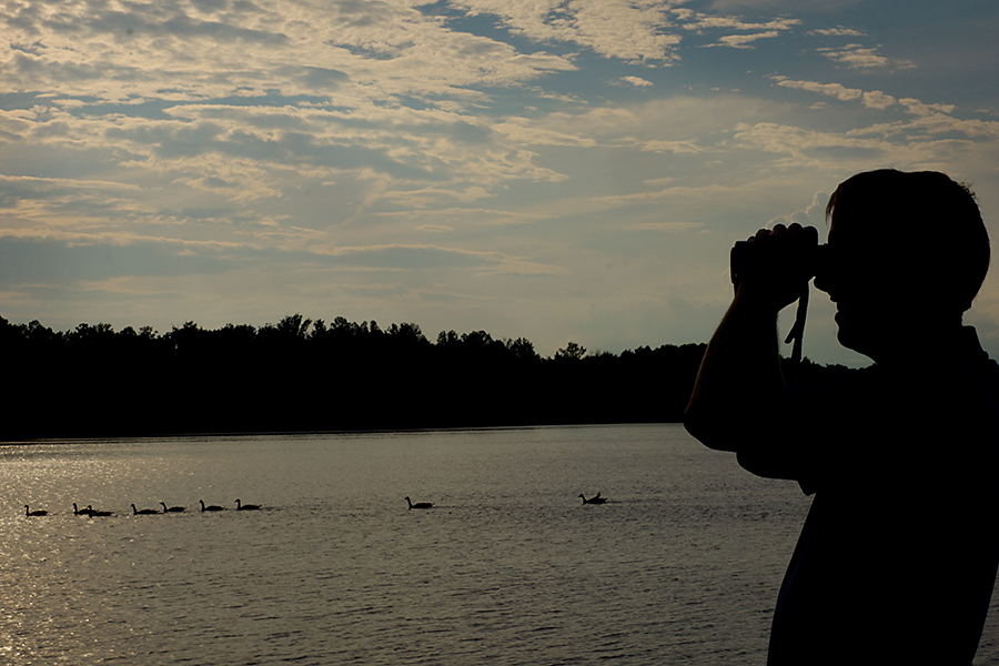 My husband bird watching. I pretty much made him drop everything when I saw this backlighting and the geese in the water. This is so him!