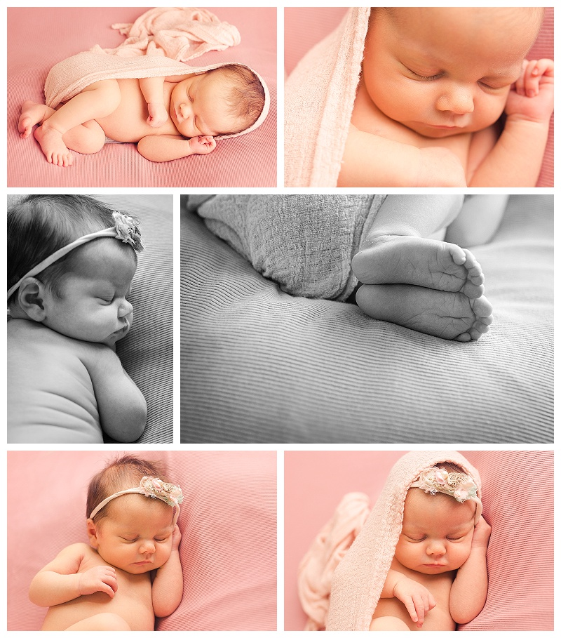 Newborn pictures greenville sc