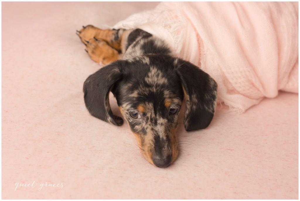 Newborn Puppy Pictures Greenville SC