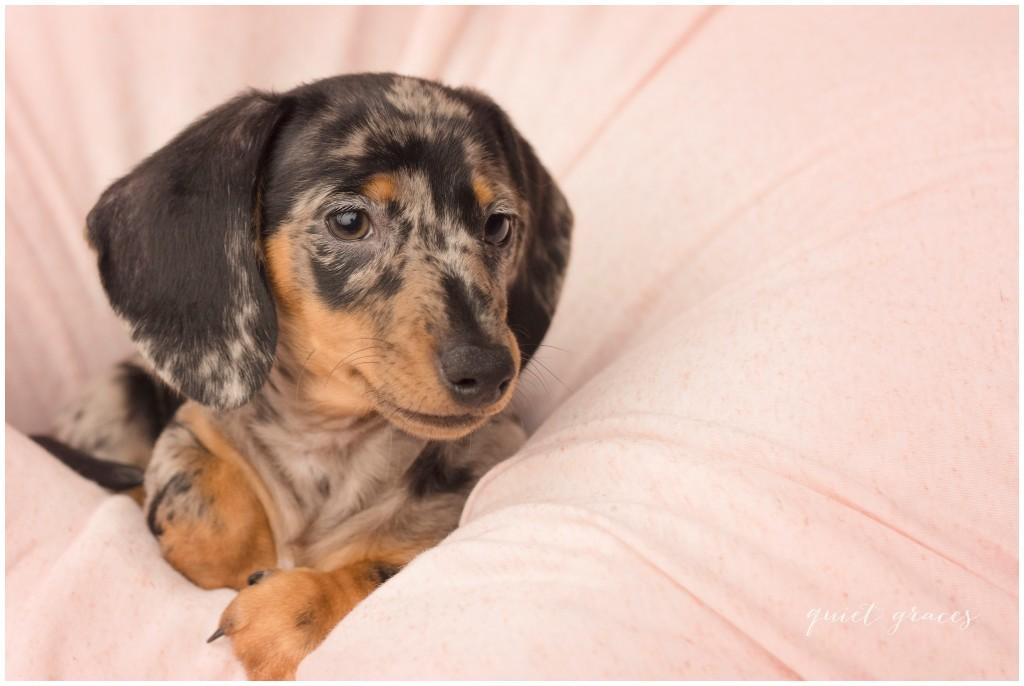Newborn Puppy Pictures Simpsonville SC
