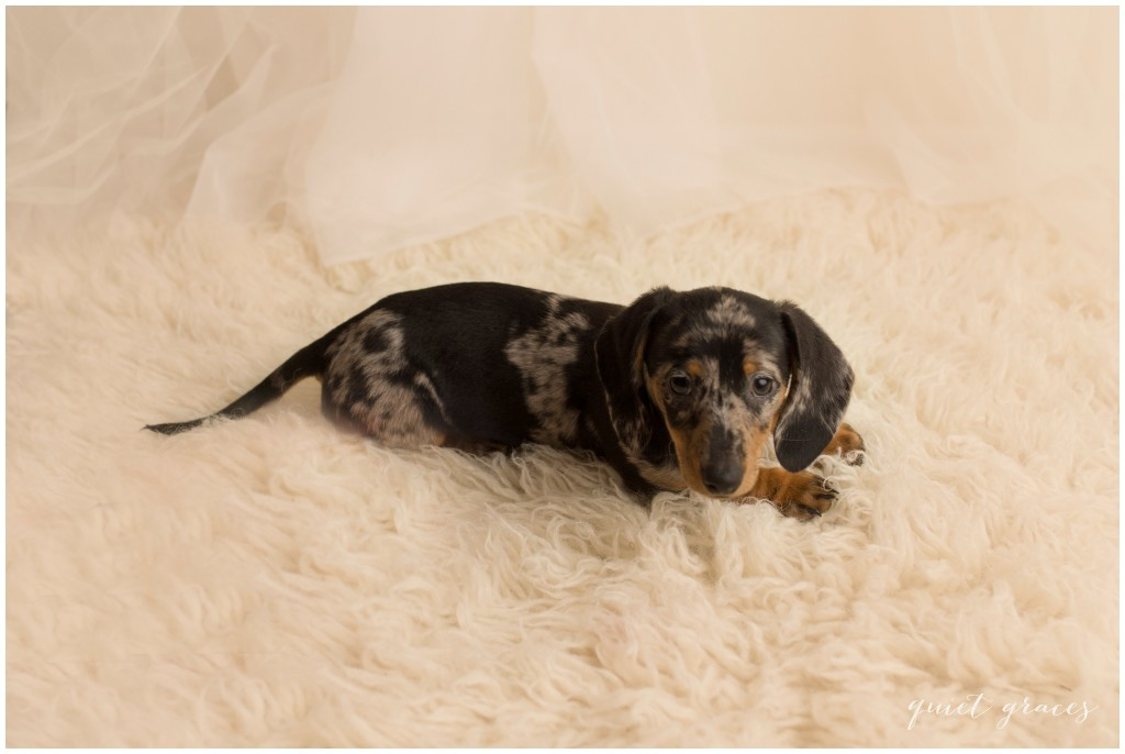 Puppy Pictures Greenville SC