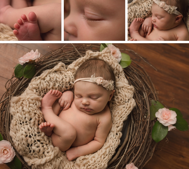 Baby in Nest pictures Greenville SC Newborn Baby Studio Pictures