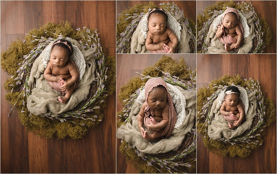 Baby in a Nest Pictures Mauldin SC